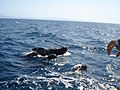 WhaleWartching Finwale.JPG