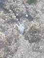 White Crab.jpg