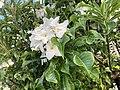 White Flowers in Green Bush.jpg