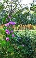 Wild flowers 2b.jpg