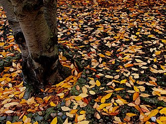 Winter Leaves - geograph.org.uk - 1553095.jpg