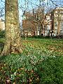 Winter in Kensington Gardens sl1.jpg