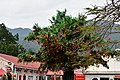 Wishing Tree at Lam Tsuen, New Territories, hong Kong (32809953901).jpg