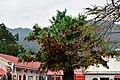 Wishing Tree at Lam Tsuen, New Territories, hong Kong (32809953901).jpg