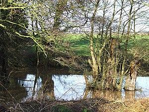 Ashwood, Staffordshire - Wooded Pool near Ashwood, Staffordshire