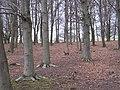 Woodland, Blagdon Park - geograph.org.uk - 1193641.jpg