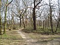 Woodland at north edge of Eltham Park, Kent - geograph.org.uk - 141263.jpg