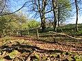 Woodland edge - Kidnalls -April 2012 - panoramio.jpg