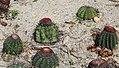 Xiamen cactii.jpg