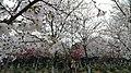 Xiangcheng, Suzhou, Jiangsu, China - panoramio (71).jpg