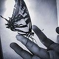 Xochiquetzal la mariposa.jpg