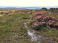 Yellow Bog, Bingley Moor - geograph.org.uk - 44704.jpg