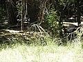 Yosemite 2011 (5995354448).jpg