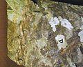Yutyrannus tail feathers.jpg