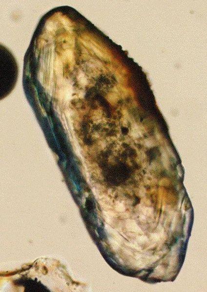 Image:Zircon microscope.jpg