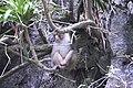 'Look, monkey'! someone screamed (31598827366).jpg