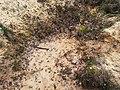 Żródło w starej piaskowni w Bukownie - panoramio.jpg