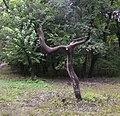 Голосіївський парк ім. Рильського М. Т. 05.jpg