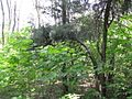 Дендрологічний парк 123.jpg