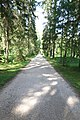 Дорога через лес - panoramio (3).jpg