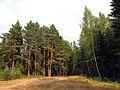 Лесной массив возле Колесниково.jpg