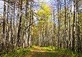 Лесные тропы MG 4919.jpg