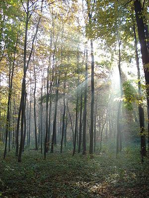 Ліс восени. вересень..JPG
