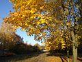 Осень - panoramio (43).jpg
