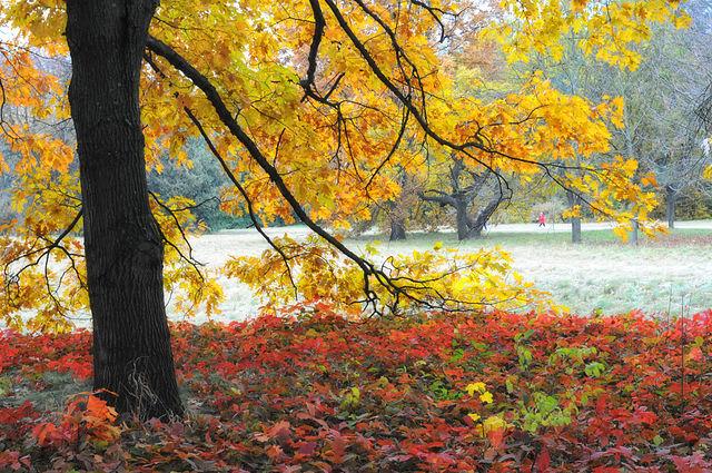 Осінь в парку Олександрія, © Сергій Криниця (Haidamac), CC-BY-SA 4.0