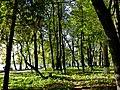 Парк Динамо - panoramio.jpg
