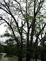 Парк шума Гази Баба во мај (143).JPG