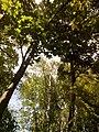 Прилуцький дендропарк Прилуцький район, м. Прилуки, вул. Вавилова, 16 74-107-500 10.jpg