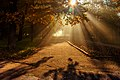 Ранкові промені на алеях. Осінь.jpg