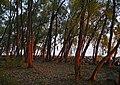 """Ранок в парку """"Долина троянд"""" (Черкаси) P1090715.jpg"""
