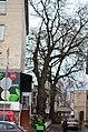 Тернопільська липа - пам'ятка природи. Фото 2.jpg