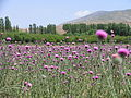 اطراف خلخال - panoramio - Farid Atar.jpg