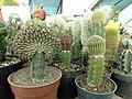 گلخانه کاکتوس دنیای خار در قم. کلکسیون انواع کاکتوس 12.jpg