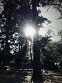 श्लेष्मान्तक वन (मृगस्थली) 11.jpg