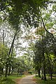 গুস্তাডা, এভোকাডো, পিতরাজ, কৃষ্ণচূড়া বাগান ২.jpg