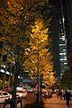 大手町 夜の銀杏並木, Ginkgo trees at night - panoramio.jpg