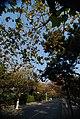 山东 青岛 - panoramio (3).jpg