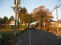 木のトンネル - panoramio.jpg