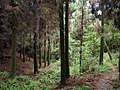 林间小路 - Trail Throuth Woods - 2011.07 - panoramio.jpg