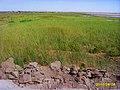 盐湖绿地 - panoramio.jpg