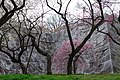 盛岡城跡公園 Morioka Castle Ruin - panoramio.jpg
