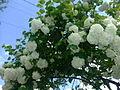 -12flower02.jpg