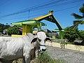 01499jfMapangpang Welcome Licaong Science City Munoz San Jose Nueva Ecijafvf 14.JPG