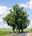 12-05-28-guenterberg-by-RalfR-12.jpg