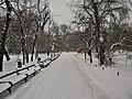 12. Bucuresti, Romania. Parcul Cismigiu in ultima zi de iarna 2018 (Drum pustiu).jpg