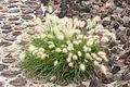 15-07-20-Teotihuacan-by-RalfR-N3S 9448.jpg